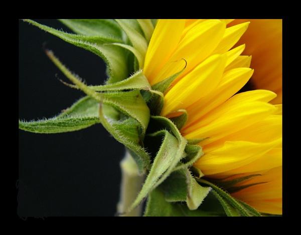 flower 120 by lizziew