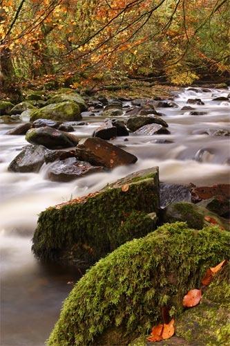 Autumn river by Sago