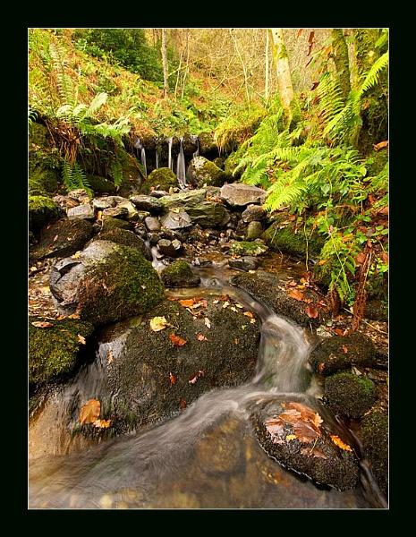 Woodland stream by Ewan