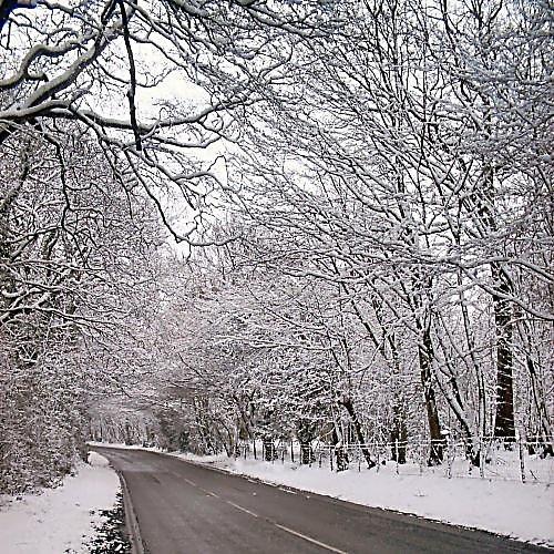 Winter Wonderland by Dennie