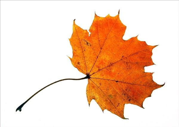 Autumn / winter by alzeepark