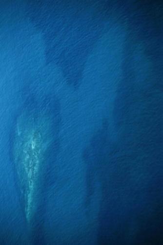 Ocean\'s  Heart by kombizz