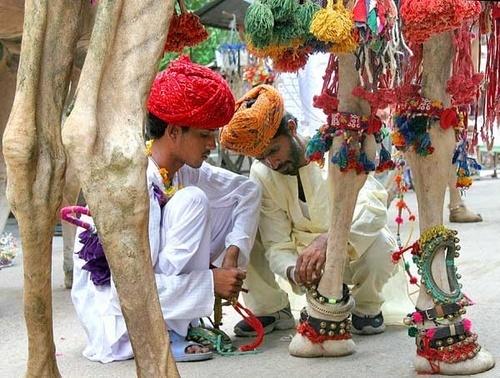 pushkar  image by Kali