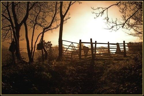 Morning Horses by Lensdust