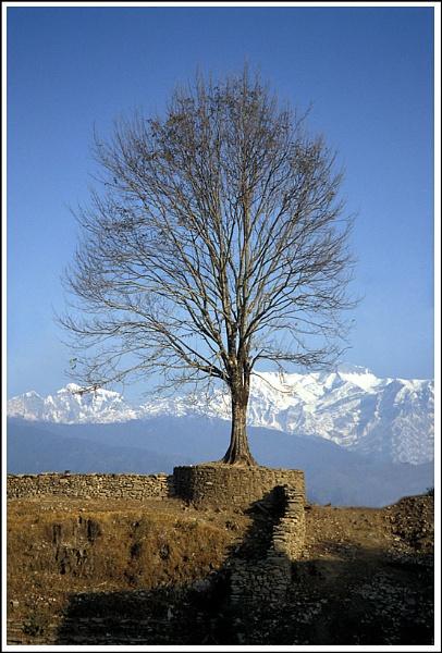Tree by AlanTW