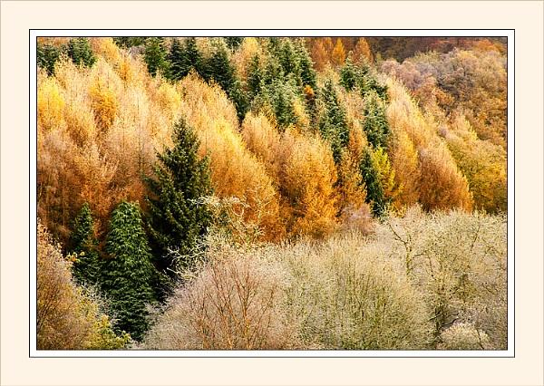 Autumn frost by Ewan