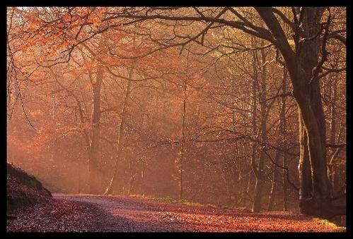 Autumn Woods by jon1169