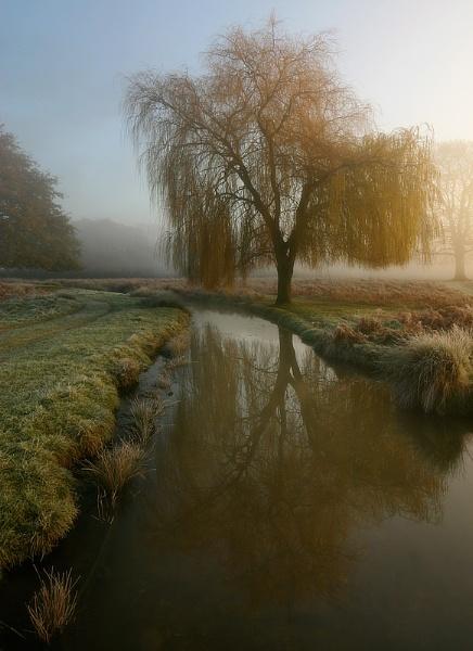 Winter Willow by itsasetamendi