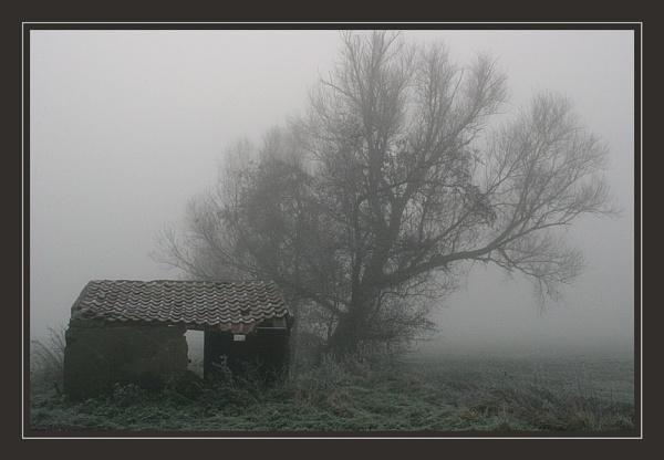 Fog by conrad