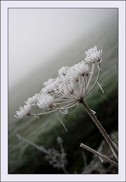Fog 2 by conrad