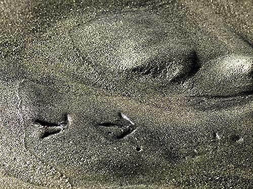 Sand Prints by gajewski