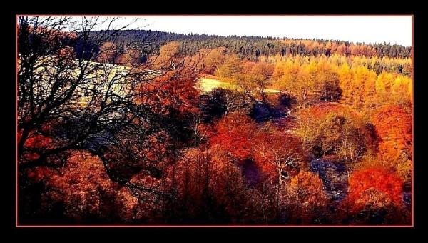lingering autumn colour by sunshot