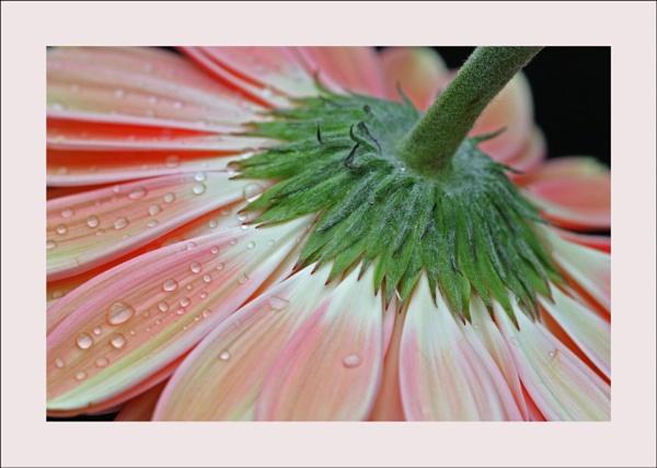 flower 121 by lizziew