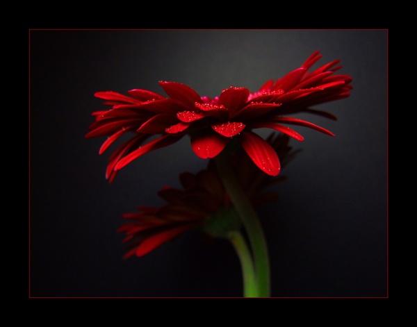 flower 122 by lizziew