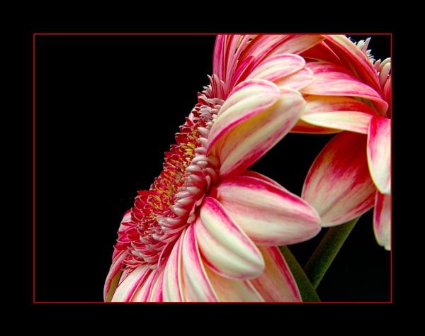 flower 123 by lizziew