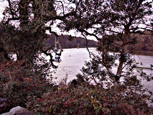 Through the trees near  crosshaven ireland by bradpete