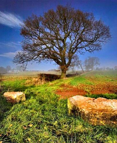 Tree, Rocks and Mist... by mizpol