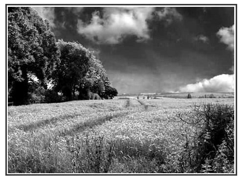 TREES & FIELDS by marshy