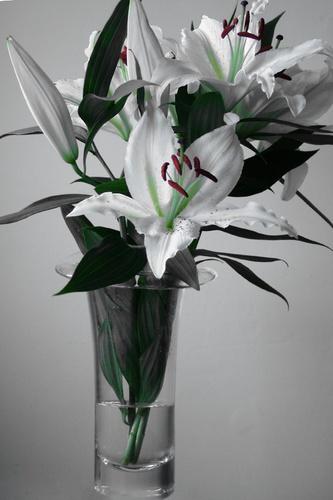 Lilies by EmmaStu