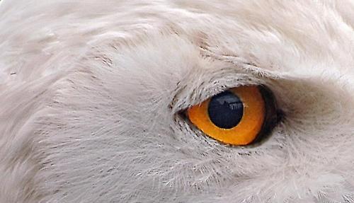 Eye on White by deavilin