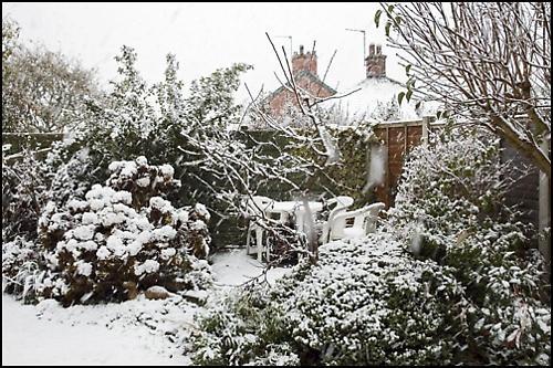 Snow Storm Blur by deavilin