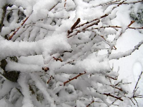 Snowbound by pcjackso