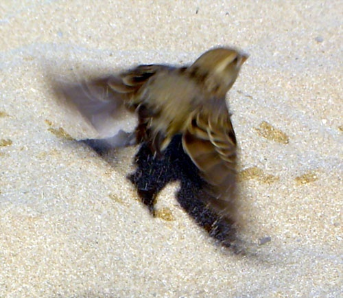feathers in the sand.. by fionaw
