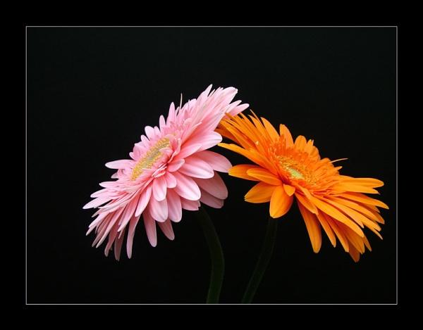 flower 124 by lizziew