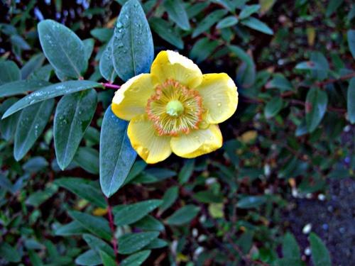WINTER FLOWER by bradpete