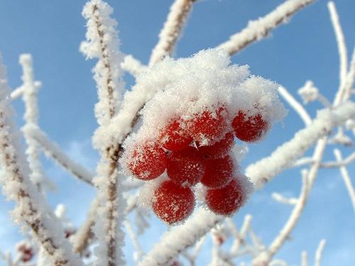 glazed cherries by smilly