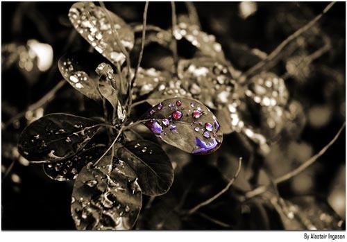Diamonds by TheBaron