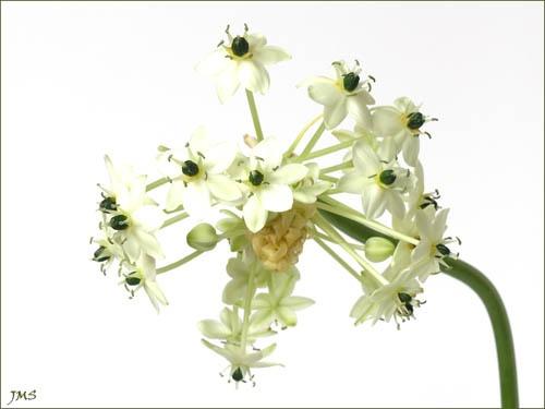flower ? by janehewitt