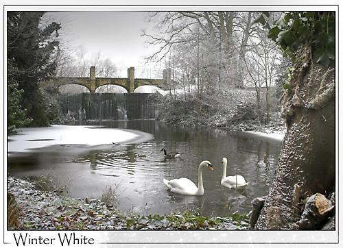 Winter White by martinproe