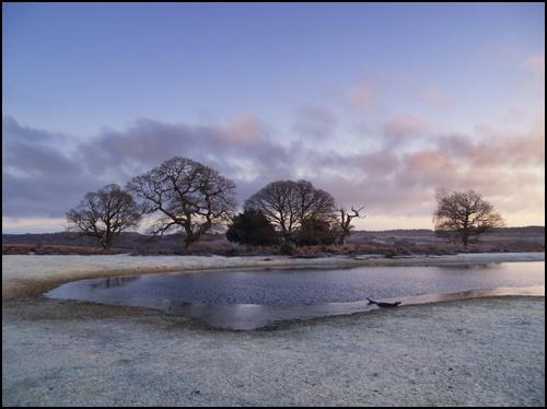 Frosty Morning by peterhorner