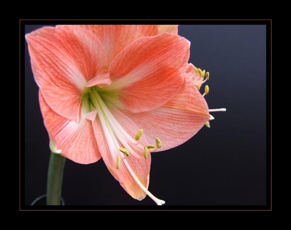 flower 125 by lizziew