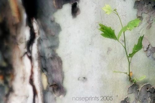 little me by noseprints