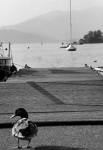 Long Walk Short Pier by lcmerrin
