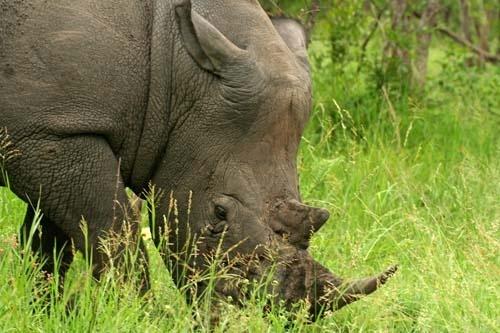 Rhino on Green by leons_photos
