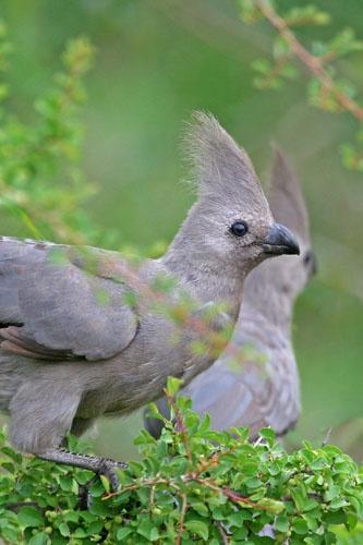 Go Away Bird :-) by leons_photos