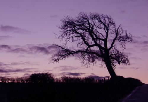 Dawn by p3asa
