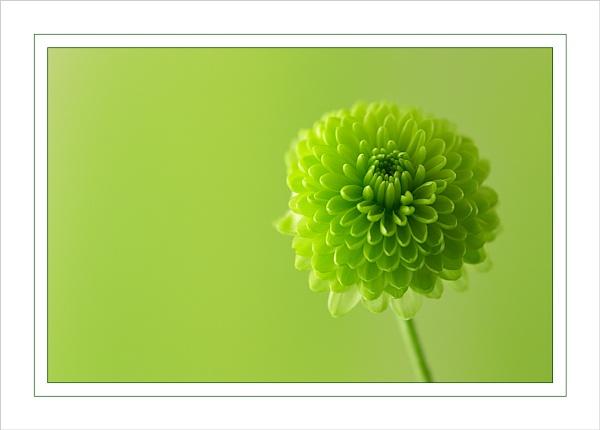 Green by Ewan