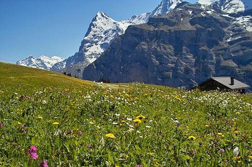 Alpine View by bargee