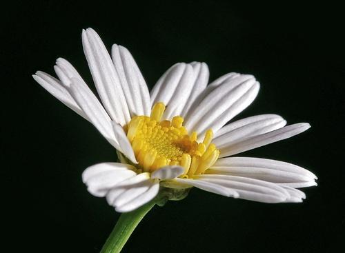 Still Flowering... by gemm