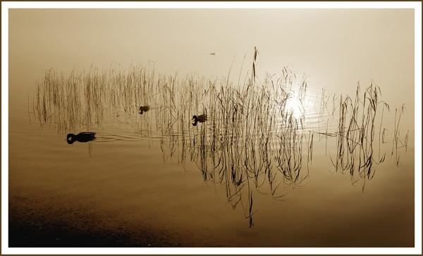 Kinlochard mist... by Scottishlandscapes