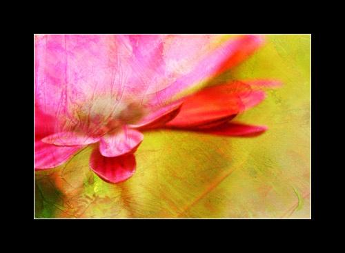 Flower Paint by webjam