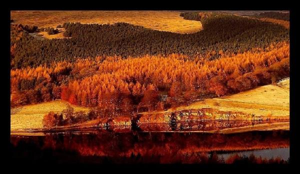 WINTER LARCH. by sunshot