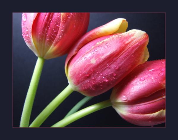 flower 127 by lizziew