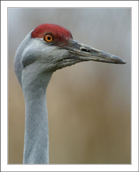Crane closeup by Christopher_Y