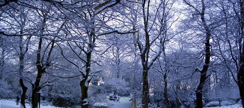 Panoramic  snow scene by bradpete
