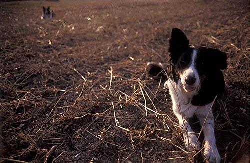 Farm paws by sjatkinson